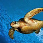 Turtles Hatch at Return to Paradise Resort